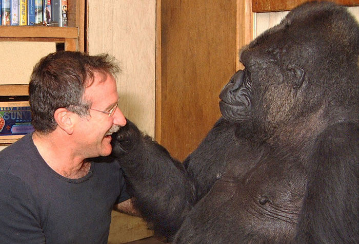 robin williams koko celebrities
